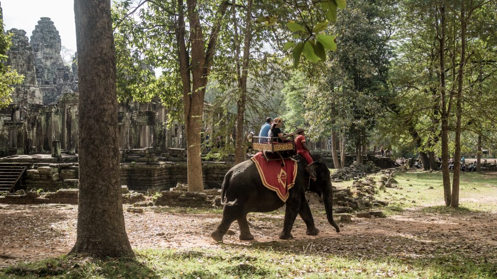 Elephant rides for the tourists. These weren't very happy elephants :( Bayon Temple, Angkor Thom, Cambodia